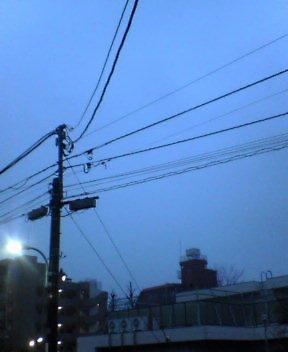 東京マラソン×green bird①